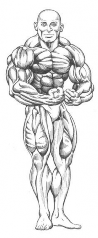 MostMuscularMale
